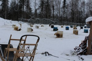 Iditarod dogs living in metal shelters. Metal houses are too hot in the summer and too cold in the winter for the dogs. Photo attributed to bwitched4you on flicker.