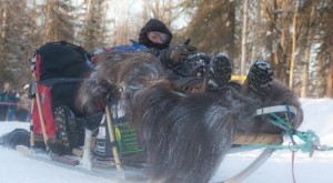 Comfortable seats mushers sit on while racing their dogs into the ground, photo attributed to Alaskan Dude on flickr