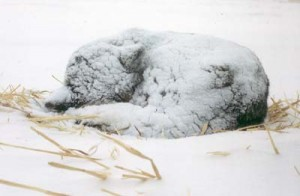 Dog asleep in snow