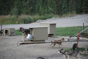Iditarod sled dog tethered on short chain must do a high jump just to get into his shelter. Photo attributed to Barrison on flickr