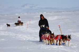 Mushers ride! A small number of dogs work to pull them to Nome. Photo attributed to mdheightshiker on flickr.