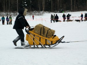 Typical bale of straw. With fewer checkpoints in the 2015 Iditarod, mushers were only given one bale of straw for their dog teams at each checkpoint. Teams could have as many as 16 dogs. Straw provides a layer of insulation against the cold ground. Having little straw, the dogs weren't well insulated against the horrific cold. Photo attributed to chrys on flickr.