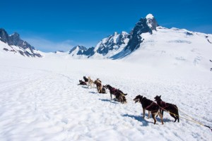 Iditarod mushers whip sled dogs who stop or slow down going up hills, even the steep ones.