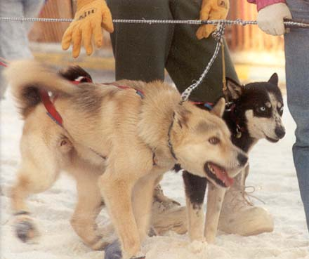 Our Successes | Sled Dog Action Coalition